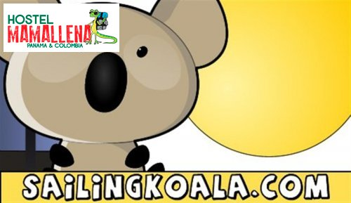 Boat-to-Colombia-koala-6